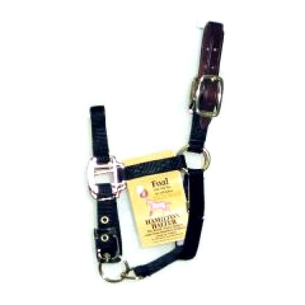 Adj Foal Halter w/Leather Headpole / Color (Black) Best Price