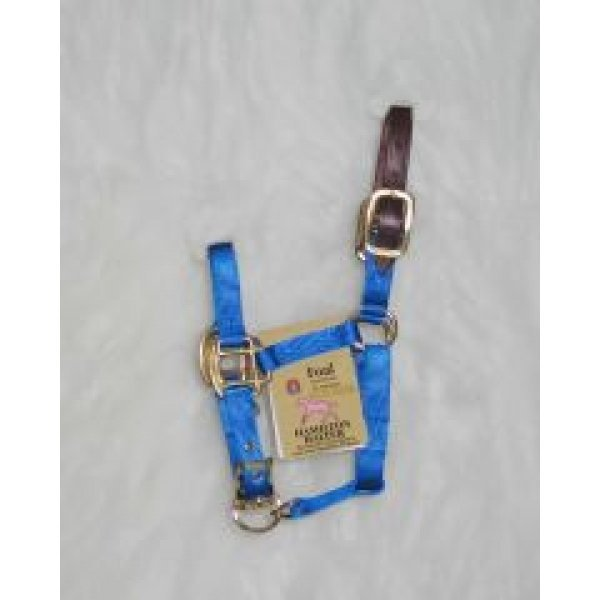 Adj Foal Halter w/Leather Headpole / Color (Blue) Best Price