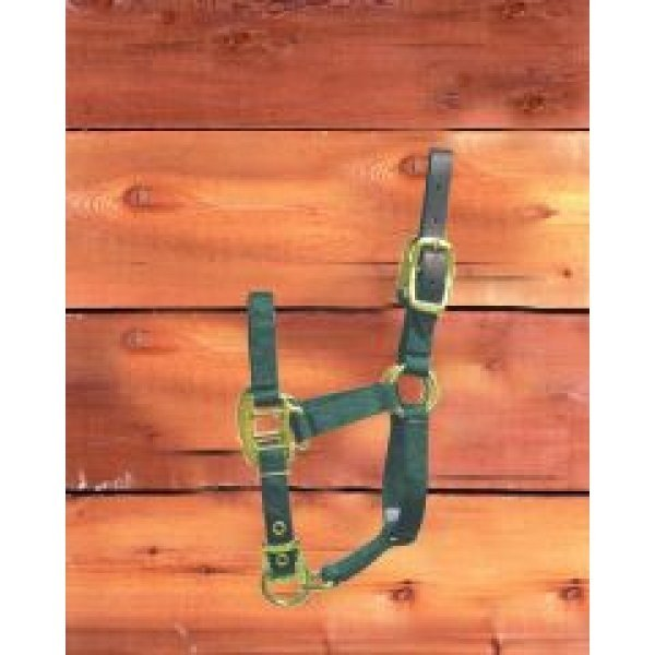 Adj Foal Halter w/Leather Headpole / Color (Dark Green) Best Price