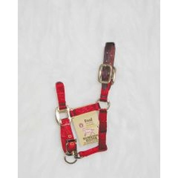 Adj Foal Halter w/Leather Headpole / Color (Red) Best Price