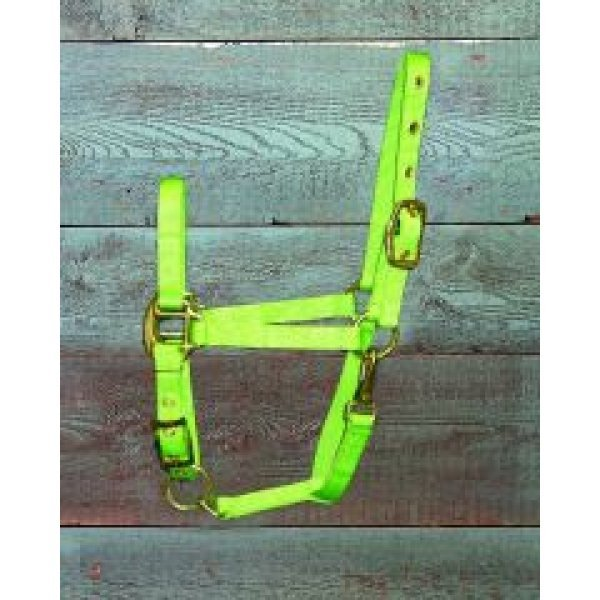 Adj. Pony Halter w/Snap / Color (Lime) Best Price