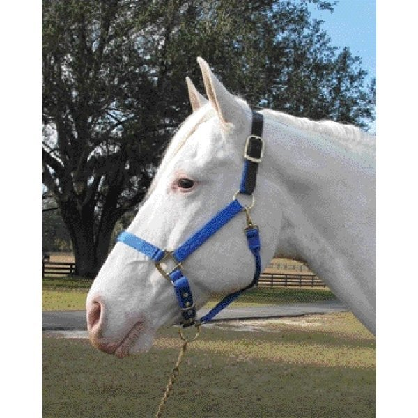 Adj Chin Halter with Headpole / Size (Average / Blue) Best Price