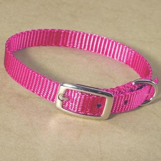 Small Dog Nylon Dog Collar / Size (Hot Pink / 12 in.) Best Price