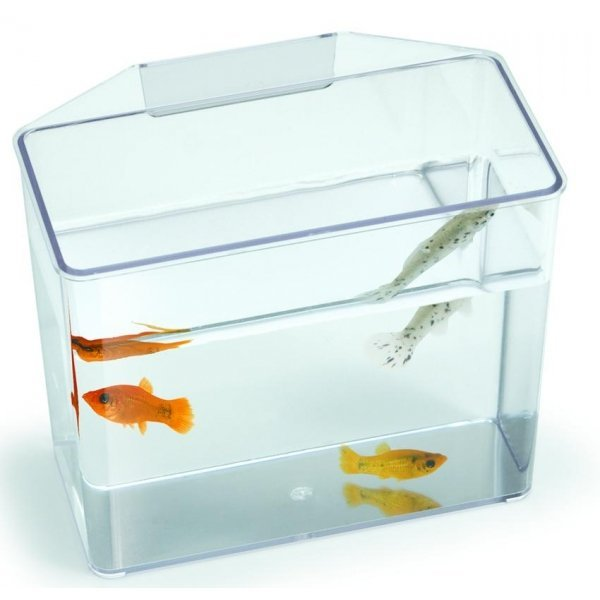 Convalescent Home And Specimen Container For Fish / Size Small