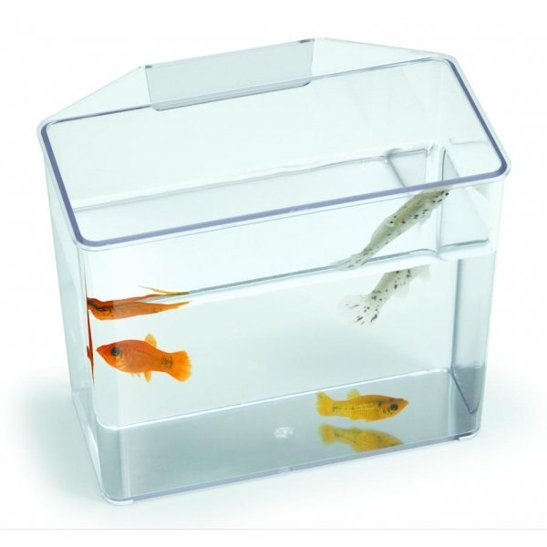 Convalescent Home And Specimen Container For Fish / Size Large