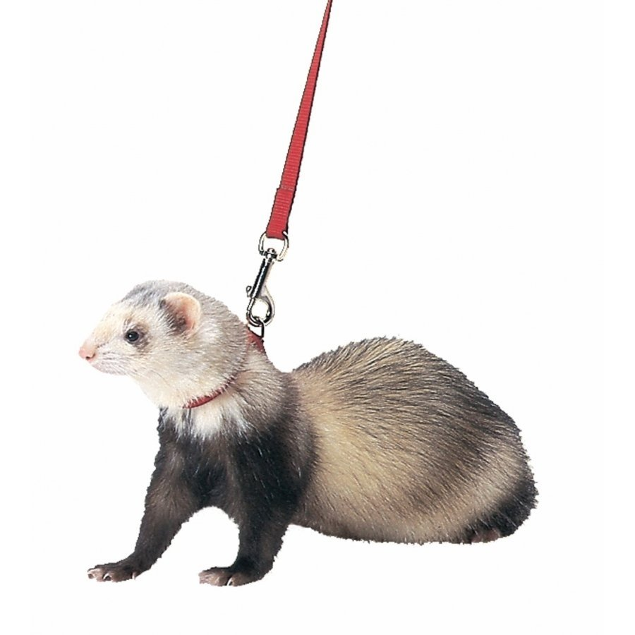 Ferret Harness And Lead Combo 48 In Ferret Products