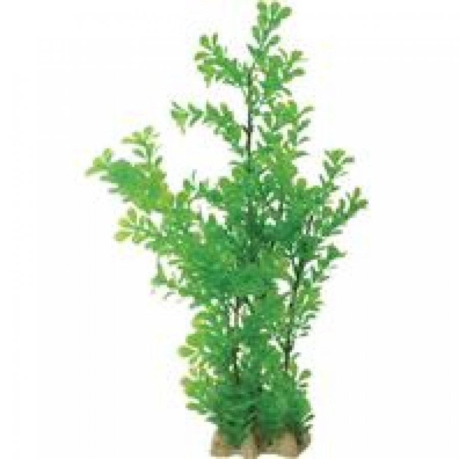Natural Elements Bacopa 17 In.