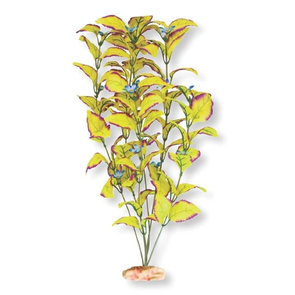 Flowering Willow Leaf Aquarium Plant - XLarge
