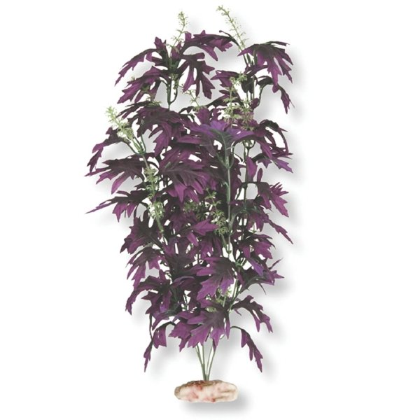 Amazon Butterfly Leaf with Bud - Medium Best Price