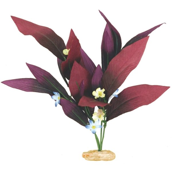 African Sword Plant with Flowers for Aquariums - Small Best Price