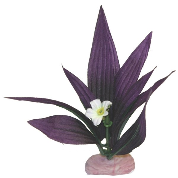 African Sword Plant with Flowers Aquarium Plant - Mini Best Price