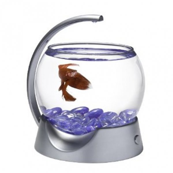 Betta fish bowl for Caring for a betta fish in a bowl