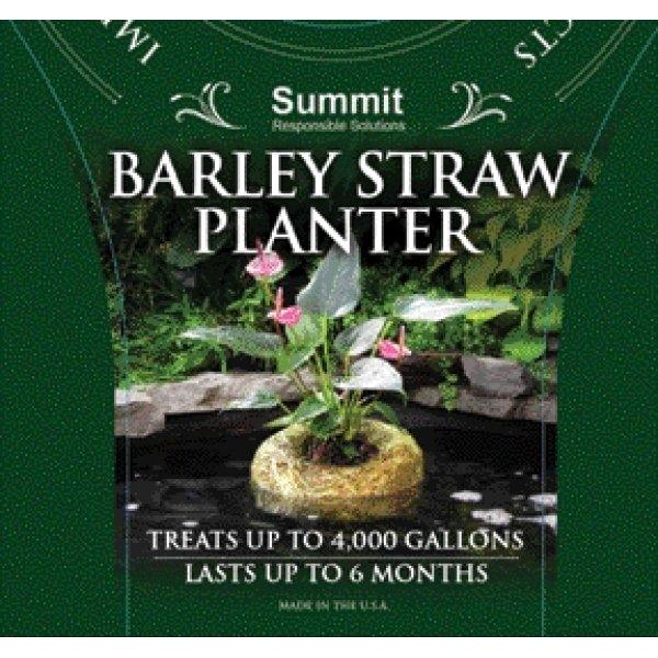 Barley Straw Planter / Size Medium