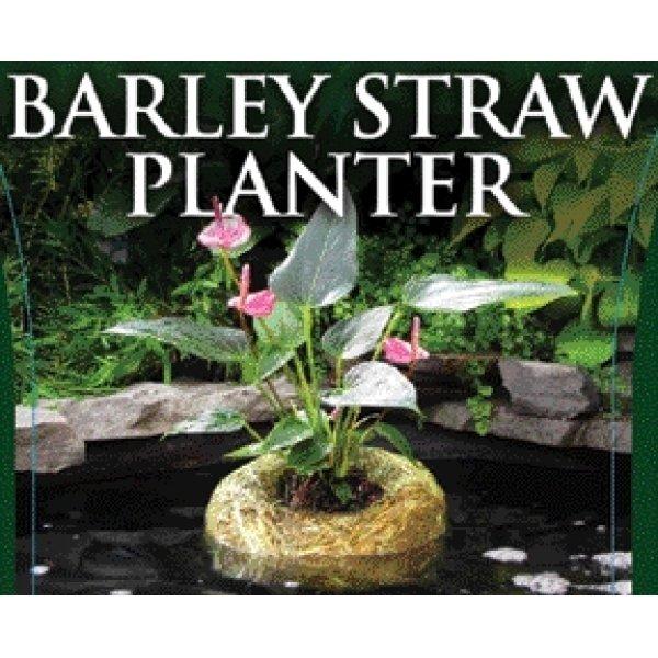 Barley Straw Planter / Size Large