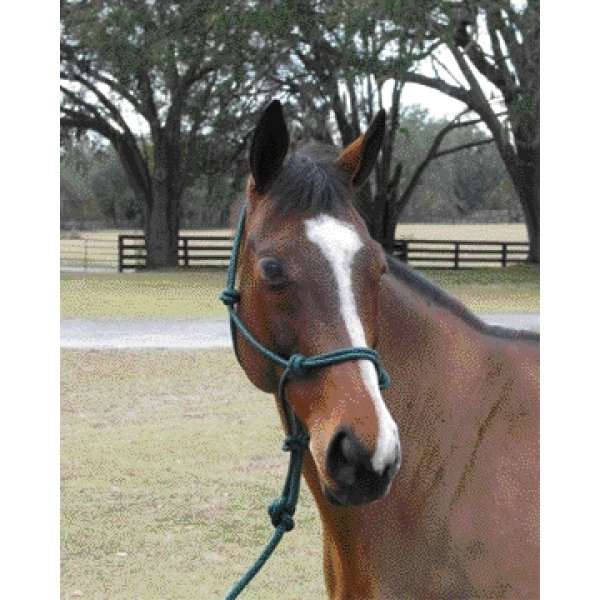 5/16 inch Knotted Style Rope Halter / Color (Dark Green) Best Price