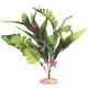 Flowering Sword Leaf Cluster Aquarium Plant - Small