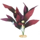 African Sword Plant with Flowers for Aquariums - Small