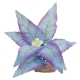 Flowering Broad Leaf Cluster Aquarium Plant - Mini