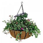 Display your beautiful hanging plants and flowers with this English style hanging basket by Gardman. A molded coco liner helps to keep the dirt and flowers inside while giving this basket a natural look. Available in a variety of sizes.     Complete