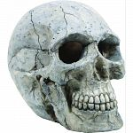 Handcrafted resin, realistic looking human skull Provides interest, hides and shelter for fish Safe in fresh and saltwater Designed for aquariums, terrariums and most animal habitats Silver tones will illuminate under light