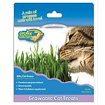 Growable, edible cat treats. Premium cat grass mixture kit. Grass grows quickly. Fiber rich dietary supplement.