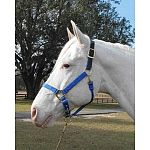 Adjustable chin halter with leather headpole. This halter comes in four different sizes and four different colors. Hamilton quality and satisfaction ensured.  Yearling, Small Horse, Average Horse and Large Horse.