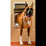 Solid aluminum construction. Locking panel. Transparent single flap for weather-tight seal. Easy do-it-yourself installation. Fits doors from 3/8 to 2 thick. Dimensions - 14 3/4 x 21 1/2 . Flap opening dimensions - 10 1/8 x 15 3/4 . For pets up to 100