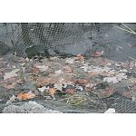 The Laguna Black Protective Pond Netting is available in a variety of sizes and protects pond fish from predators, while keeping leaves and debris out of the pond, reducing maintenance. Prevents pond fish from jumping. Comes with stakes.