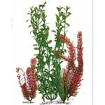 Water Wonders Four Plant Assortments offers you various combinations of aquarium plants for your aquarium. Makes choosing plants for your aquarium easy and quick. Plants are designed to easily connect to the Water Wonders ornaments.