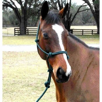 5/16 inch Knotted Style Rope Halter