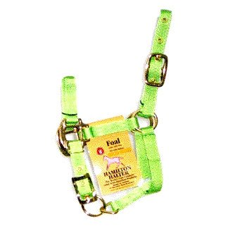 Foal Halter with Adj. Chin - Lime