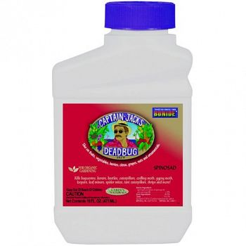 Deadbug Brew Insecticide Conc. - 1 pint