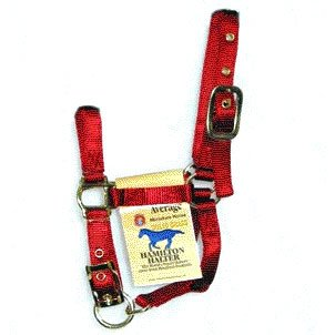 Halter Adj Miniature - 3/4 inch Red / Average