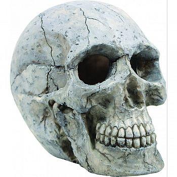 Human Skull Ornament