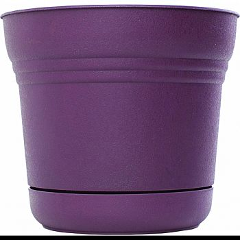 Saturn Planter EXOTICA 5 INCH (Case of 12)
