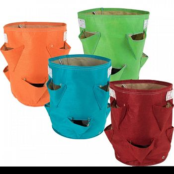 Bloembagz Strawberry Planter ASSORTED