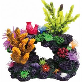 Coral Reef Formation  8X5X8