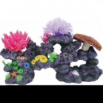 Coral Reef Formation  15X6X8