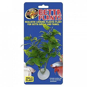 Philodendrom Betta Plant