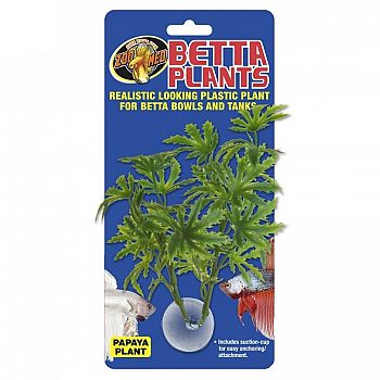 Papaya Betta Plant