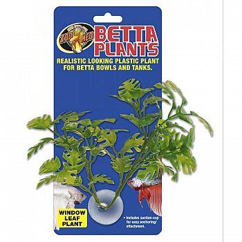 Window Leaf Betta Plant