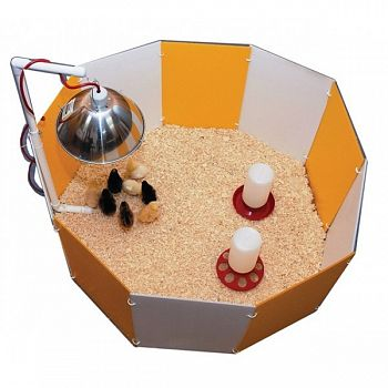 Baby Chick Starter Home